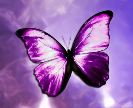 The Purple Butterfly by R J Dent